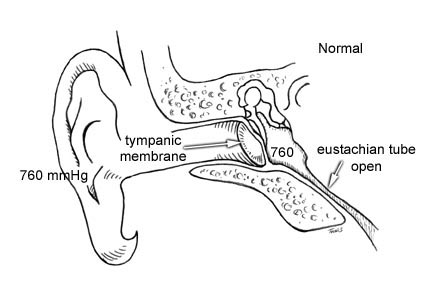 The anatomy of the ear. The 760 notes atmospheric pressure in the middle ear. The eustachian tube supplies air to the middle ear