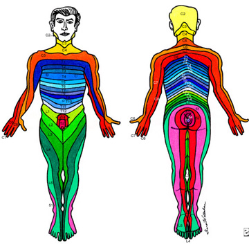 Picture of Body Dermatomes