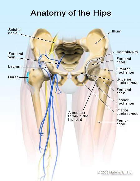 hip flexion contracture take a look at