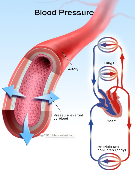 Picture of the blood pressure and circulatory system