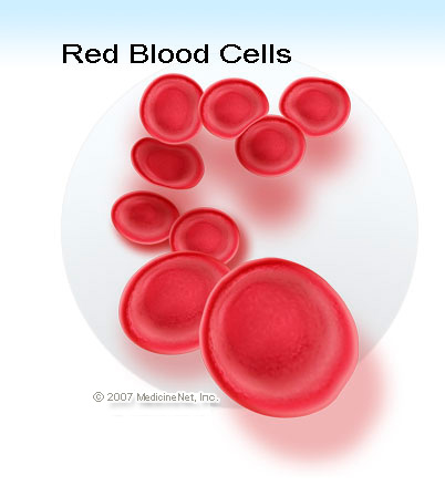 Picture of healthy red blood cells.