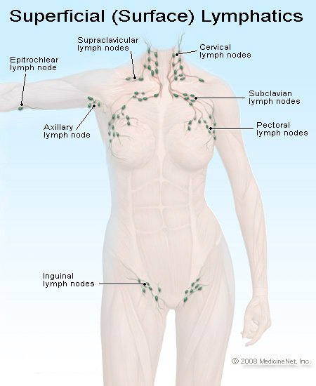 Picture of Superficial Lymph Nodes in the Body