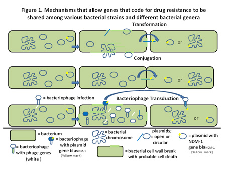 Mechanisms that allow genes that code for drug resistance to be shared among various bacterial strains and different bacterial genera