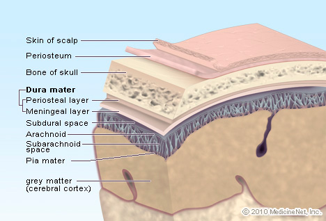 Picture of Brain Layers