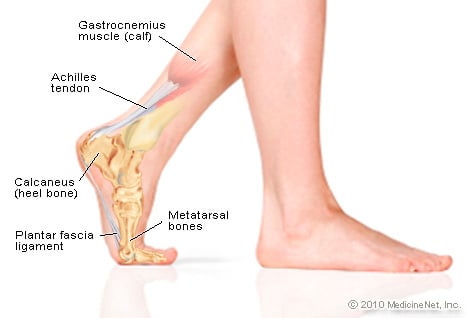 Picture of Foot Anatomy