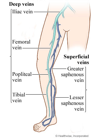 Picture of leg veins
