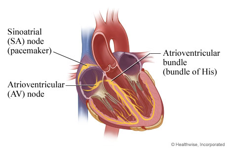 Picture of the electrical system of the heart