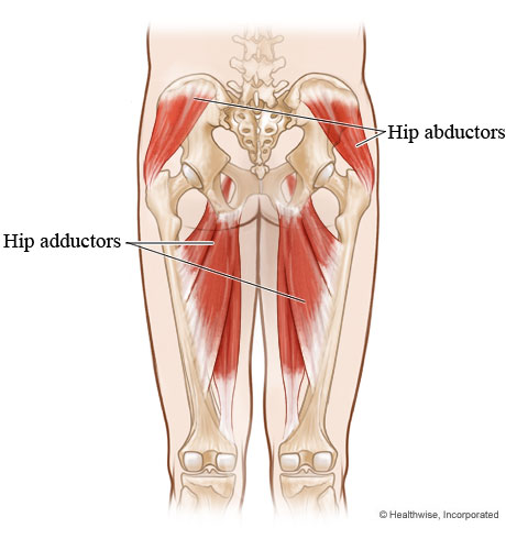 Outer core muscles of the hips