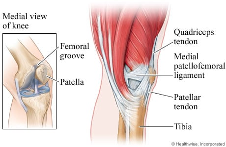 Picture of knee muscles, ligaments, and tendons (inner-side view)