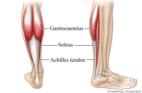 Achilles tendon and calf muscles