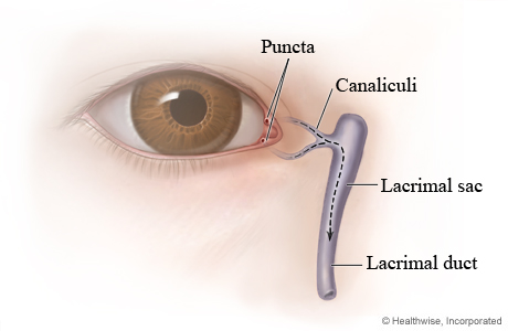 Picture of tear duct anatomy