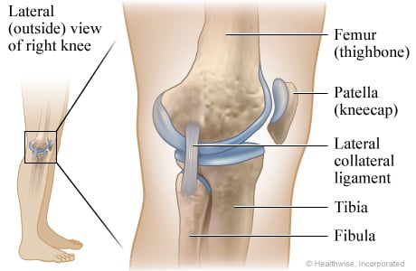 Picture of the ligaments of the knee: Lateral (outside) view