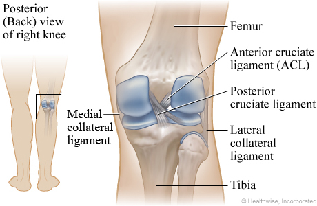 Picture of ligaments of the knee: Posterior (back) view of the right knee