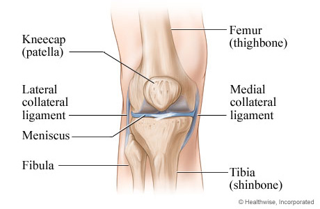 Knee anatomy
