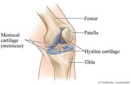 Picture of a normal knee joint