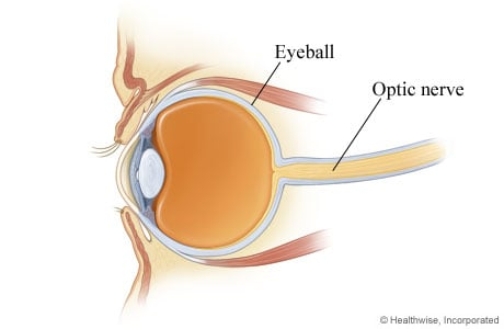 Picture of the optic nerve