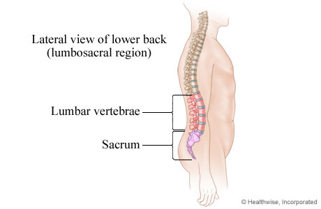 Picture of the lumbosacral region of the spine (lower back)