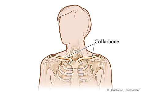 Picture of the collarbone