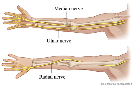 Picture of the three main nerves of the arm