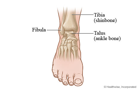 Picture of a front view of the ankle
