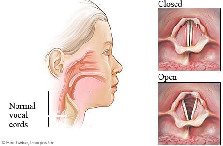 Picture of normal vocal cords: closed and open