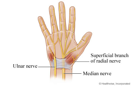 Picture of nerves of the hand