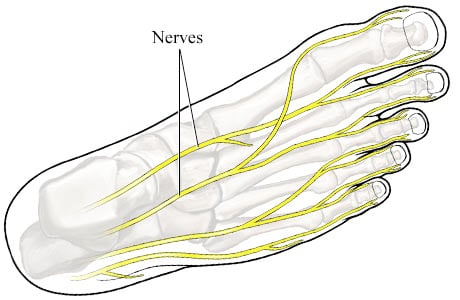 Picture of nerves of the foot