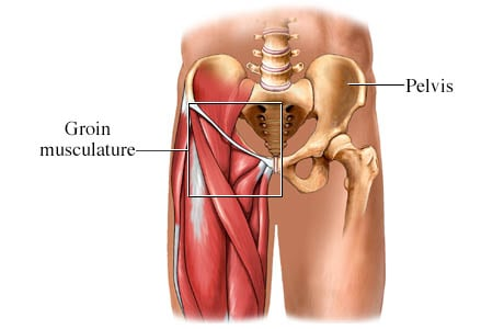 Picture of the groin