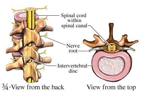 Picture of spinal cord anatomy