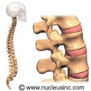 Picture of the spinal column