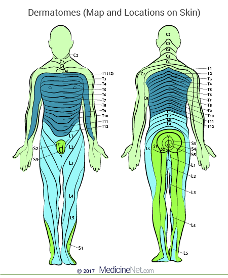 Skin Dermatome Map of the Human Body