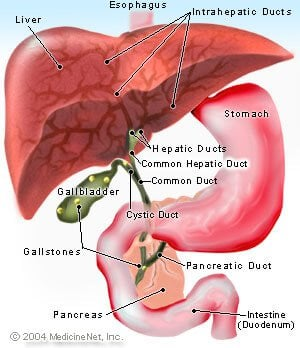 gallbladder pain symptoms, location & pain relief, Cephalic Vein