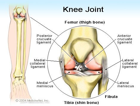 torn acl recovery time, symptoms & surgery, Cephalic Vein