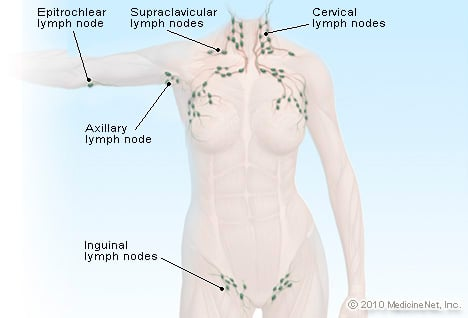 illustration picture of lymphatic system - lymph nodes, Cephalic Vein