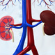 Kidney Disease Quiz