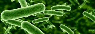 Illustration of probiotic bacteria.