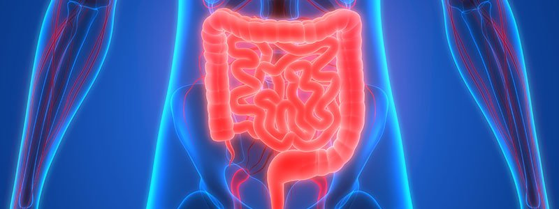 Illustration of the human colon.