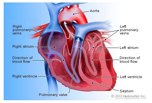 Heart Disease Symptoms, Signs, and Causes Slideshow