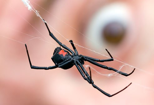 Spider Bites How Dangerous Are They? Slideshow