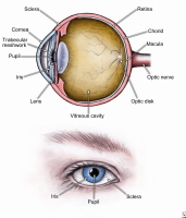 Basic anatomy of the eye.