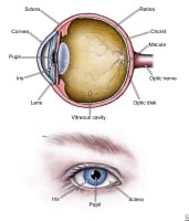 Parts of the eye.