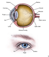 Diagrams of the eye.