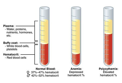 What Does a Low Hematocrit Mean?