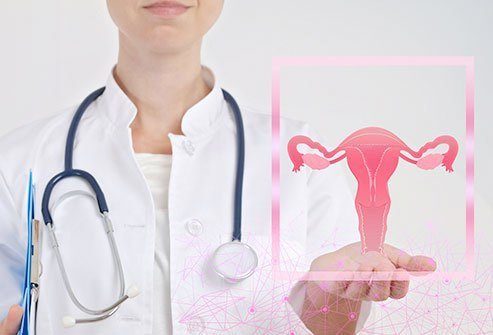 Picture of a doctor holding a model of the female reproductive system.