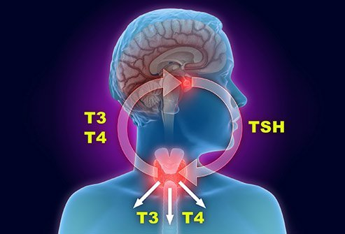 Thyroid medications treat a variety of thyroid problems
