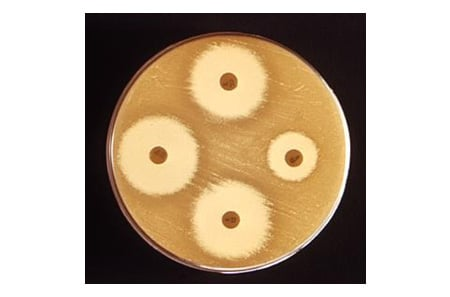Kirby-Bauer disk test for antibiotic resistance/susceptibility pattern. SOURCE: CDC/Gilda L. Jones