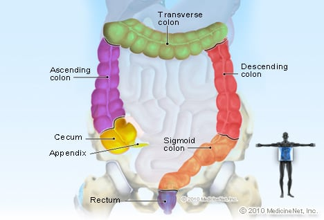 Illustration Picture Of Anatomy Colon