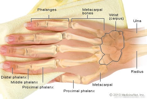 Illustration Picture Of Anatomical Structures Fingernail Anatomy