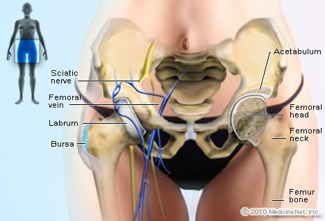 Illustration Picture of Anatomical Structures – Hip