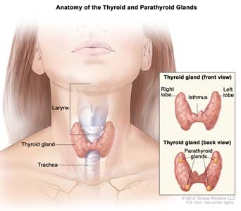 Thyroid Nodules Treatment Causes Biopsy
